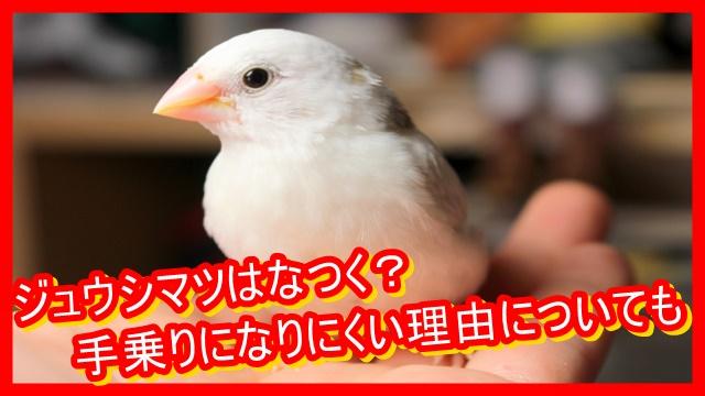 な つく 文鳥